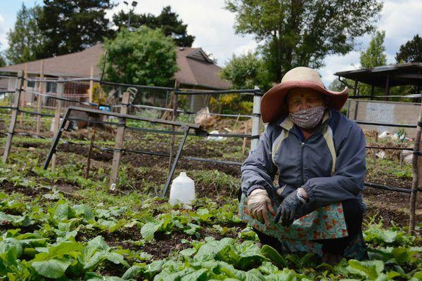 20200604-community-garden-covid-tove-danovich.jpg-7
