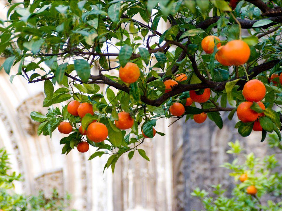 20141103-seville-oranges-max-falkowitz.jpg