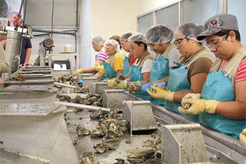 20110615-nola-oysters-3.jpg