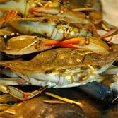A pile of soft shell crabs.