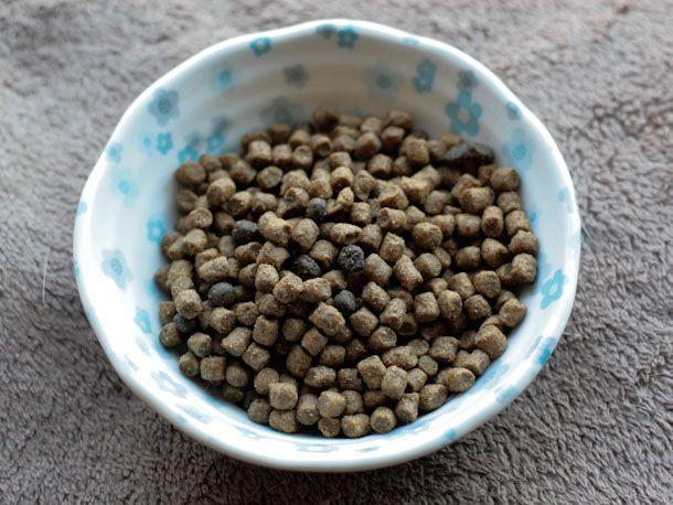 033014-288241-cat-food-review-blue-wilderness-bowl.jpg