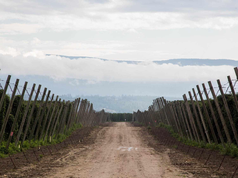 20140903-hop-farm-field-rabi-abonour.jpg