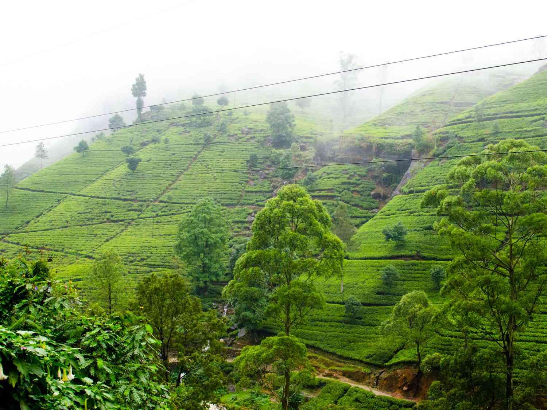 20150331-tea-hills-max-falkowitz-2.jpg