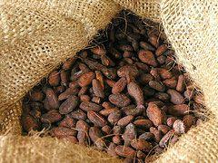 20081008-cacoa-plant.jpg