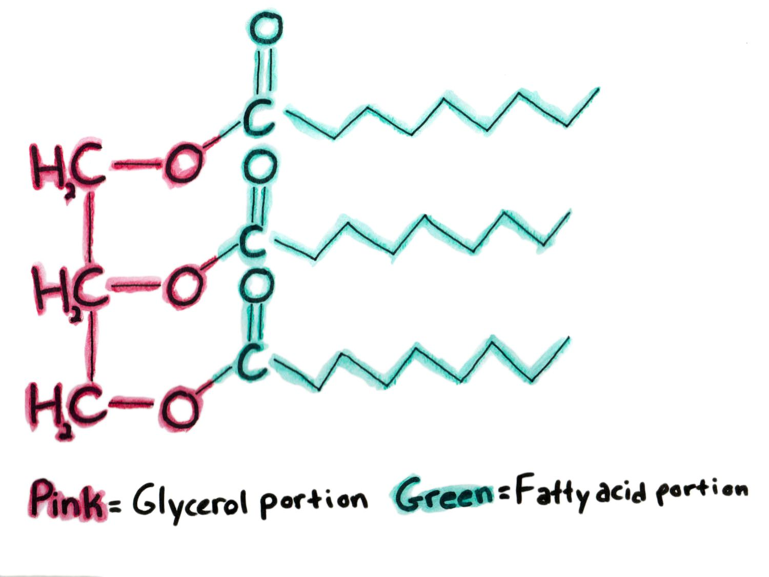 20140714-cream-science-what-happens-when-you-whip-it-claire-lower-triglyceride.jpg