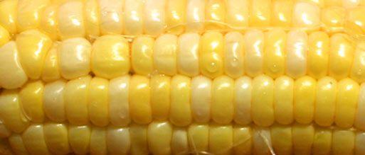 20120802-corn-chowder-3.jpg