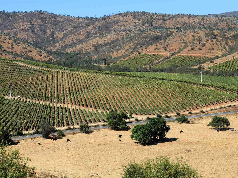 20150713-chilean-wine-casablanca-vineyards-shutterstock.jpg