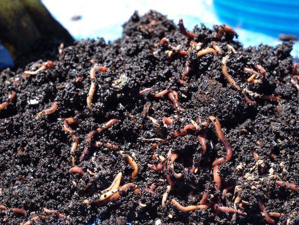 20131003-worms.jpg