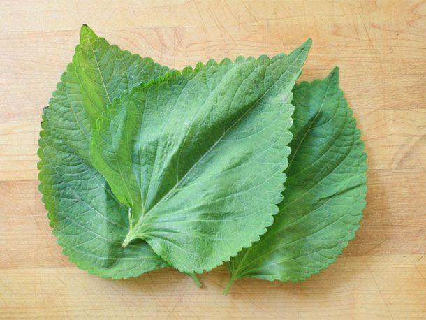 20110722-perilla-leaves.jpg