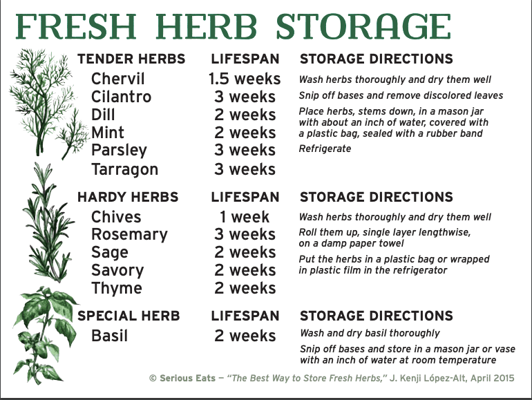 guide to how to store fresh herbs