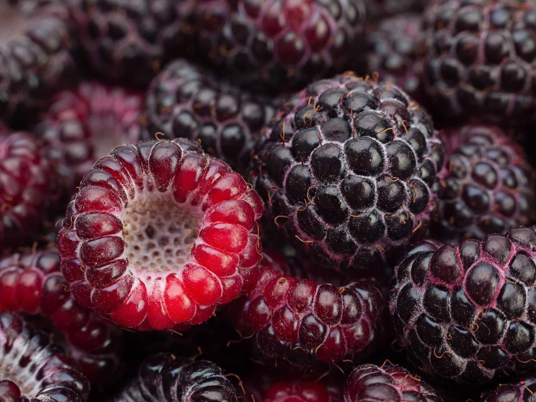 shutterstock_207009724-black-raspberry.jpg