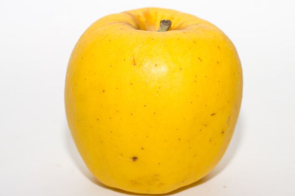Opal apple close up