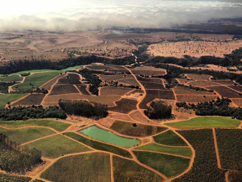 20150625-chilean-wine-leyda-valley-fog-jake-pippin.jpg