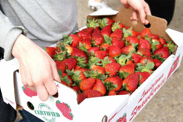 041513-strawberry-festival.jpg