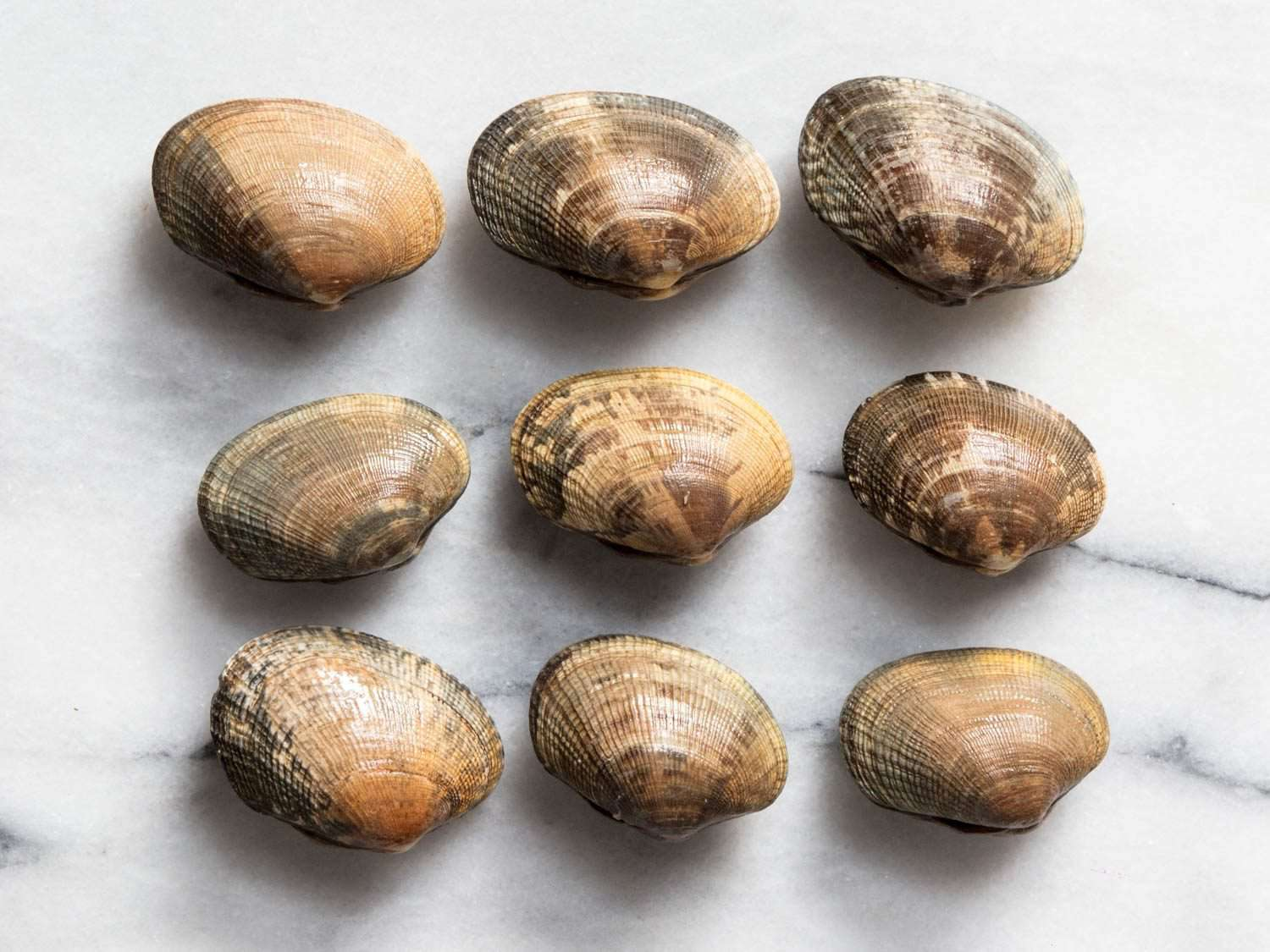 Nine manila clams arranged in rows of three on a marble surface
