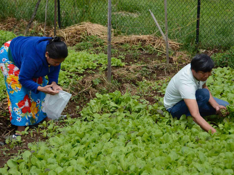 Gardeners tending their plot in a community garden run by Outgrowing Hunger in Portland, Oregon.