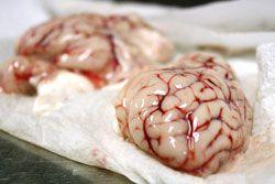 20100420-nastybits-brains.jpg