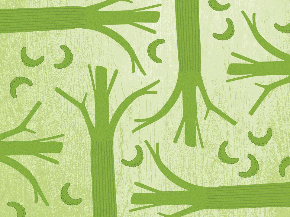 celery2-web.jpg