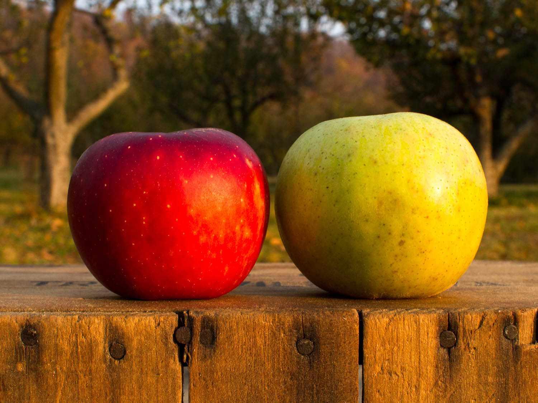 20141007-best-southern-cider-apples-christopher-lehault.jpg