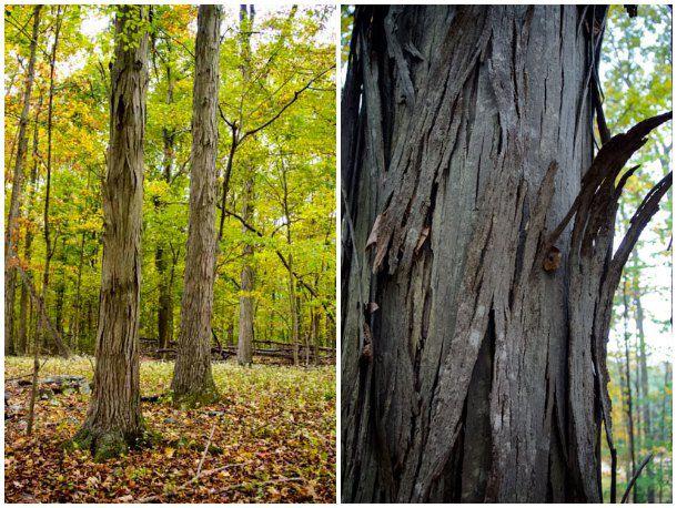 20131029-foraged-treecollage.jpg