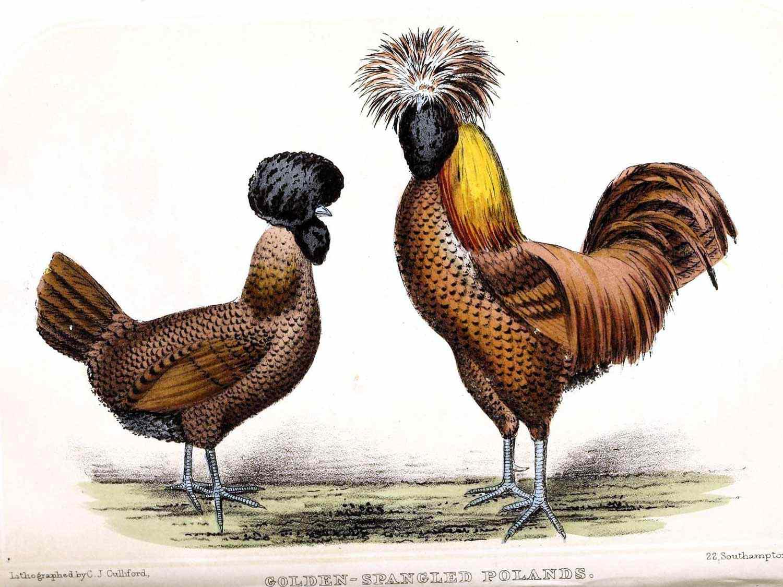 zen-weird-birds