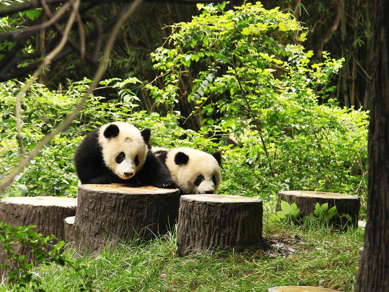 20140625-pandas-12.JPG