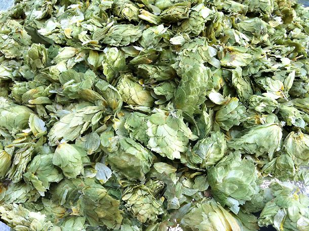 20110618-157268-dried-hops.jpg