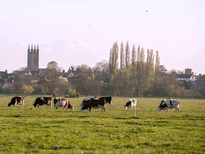20170901-cows-grazing-landscape.jpg
