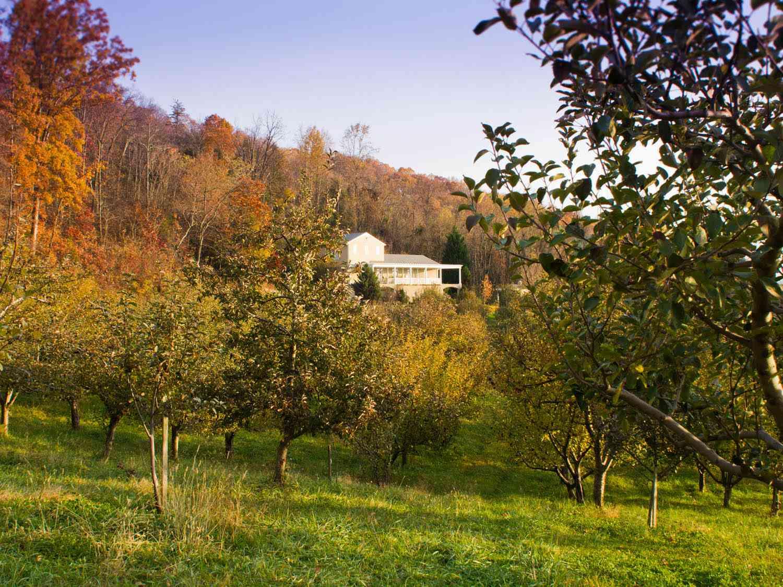 20141007-best-southern-cider-albemarle-orchard-christopher-lehault.jpg