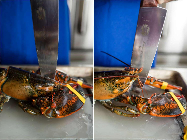 20170407-lobster-bisque-vicky-wasik-killing-lobster.jpg