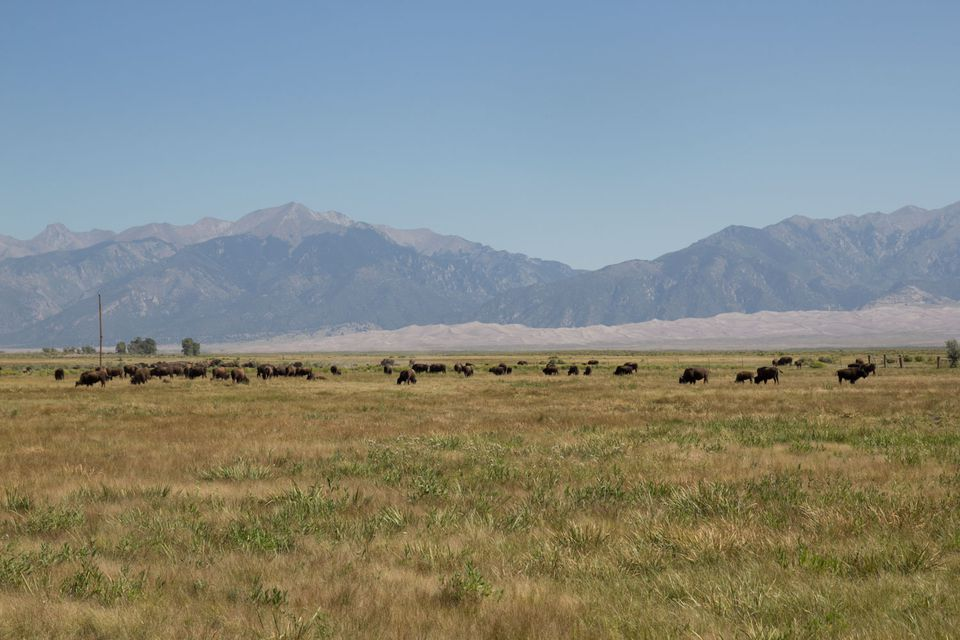 20131031-herding-in-colorado.jpg