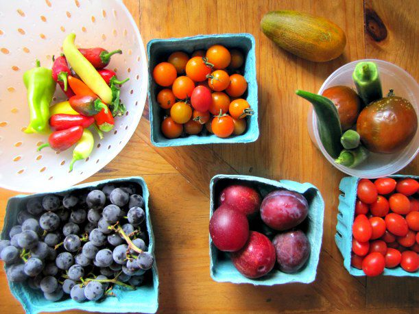 20130505-csa-fruits.jpg