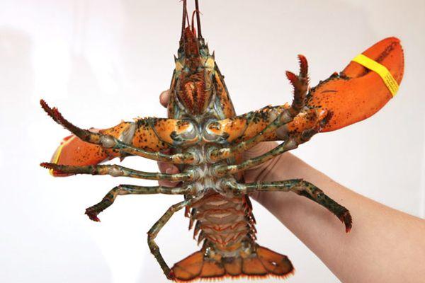 20130527-lobster-guide-food-lab-01.jpg