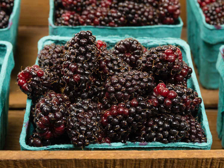 shutterstock_157203551-marionberries.jpg