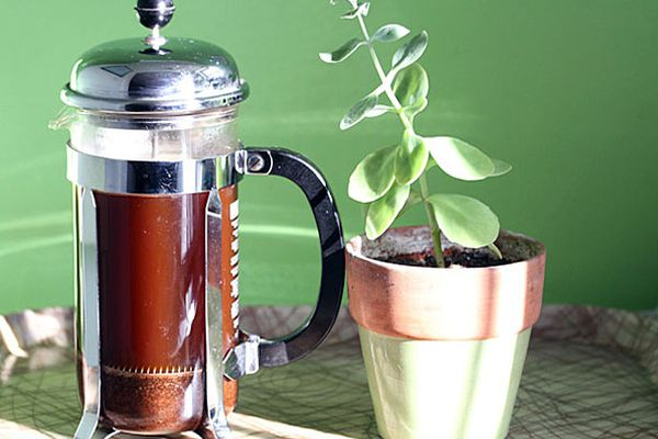 Coffee brewing in a French press next to a plant.