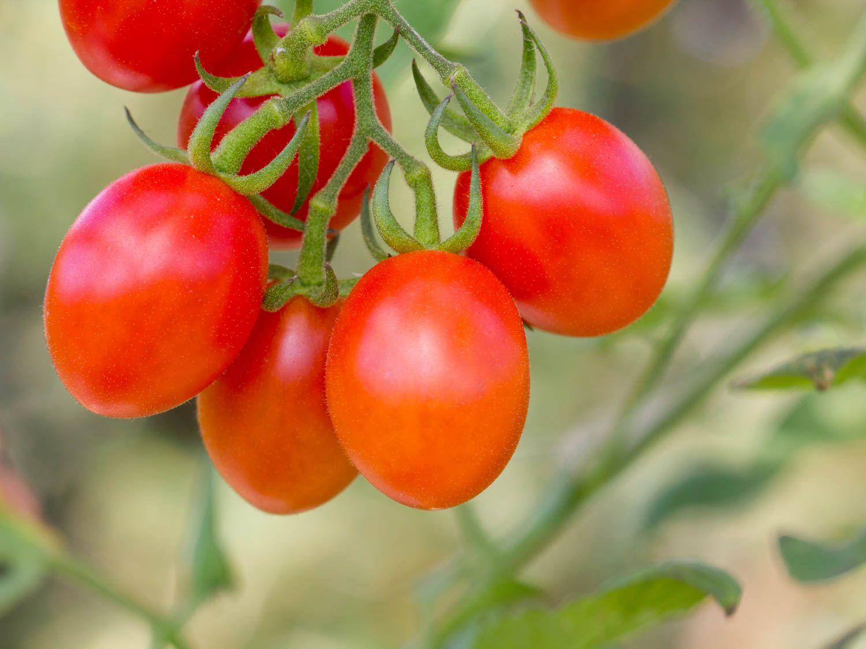 20150622-tomato-guide-grape-shutterstock.jpg