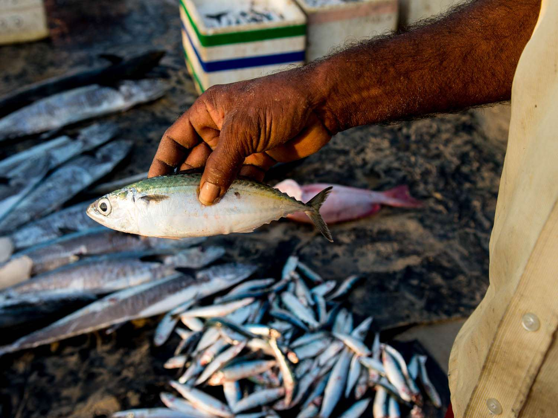 20140802-sri-lankan-food-fish-sri-lanka-naomi-tomky.jpg