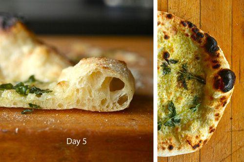20100923-pizza-lab-fermentation-day-5.jpg