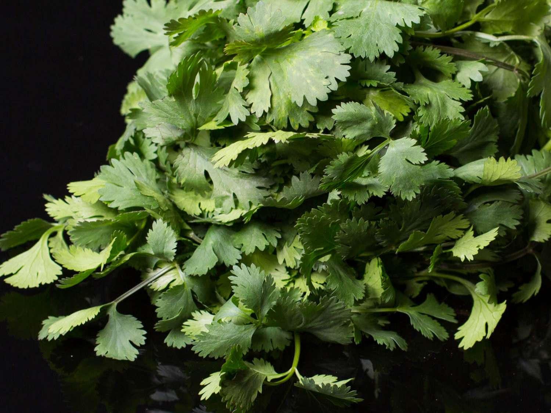 20140908-aguachile-ingredients-vicky-wasik-19-cilantro.jpg