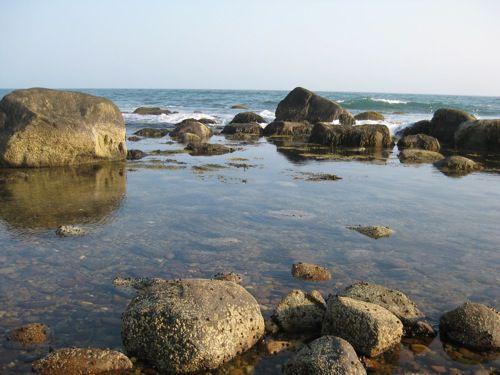 179694-office-seaweed-jen-lighty.JPG