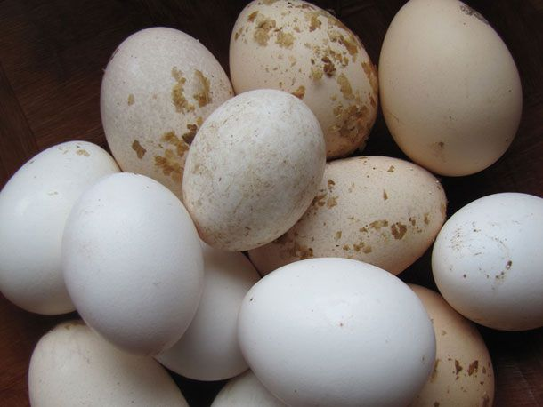 20140519-eggs-cropped.jpg