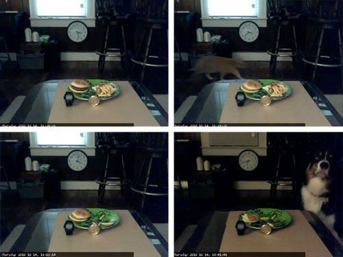 20101019-mcdexperiment.jpg