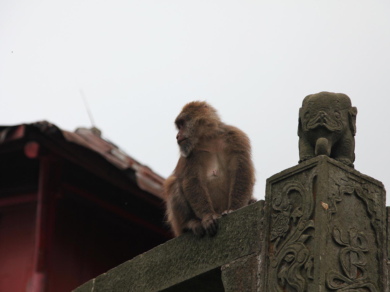20140627-emei-shan-36.jpg
