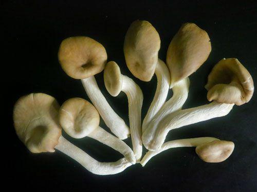 20120202-1911120-tom-yam-kung-mushrooms-2.jpg