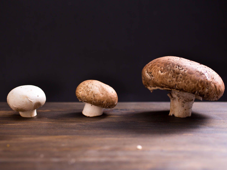 20150527-mushroom-guide-vicky-wasik-5.jpg