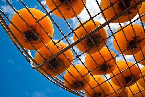 Fuyu persimmons drying on a rack in the sun.