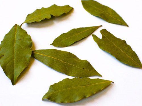 20140404-bay-leaves.jpg