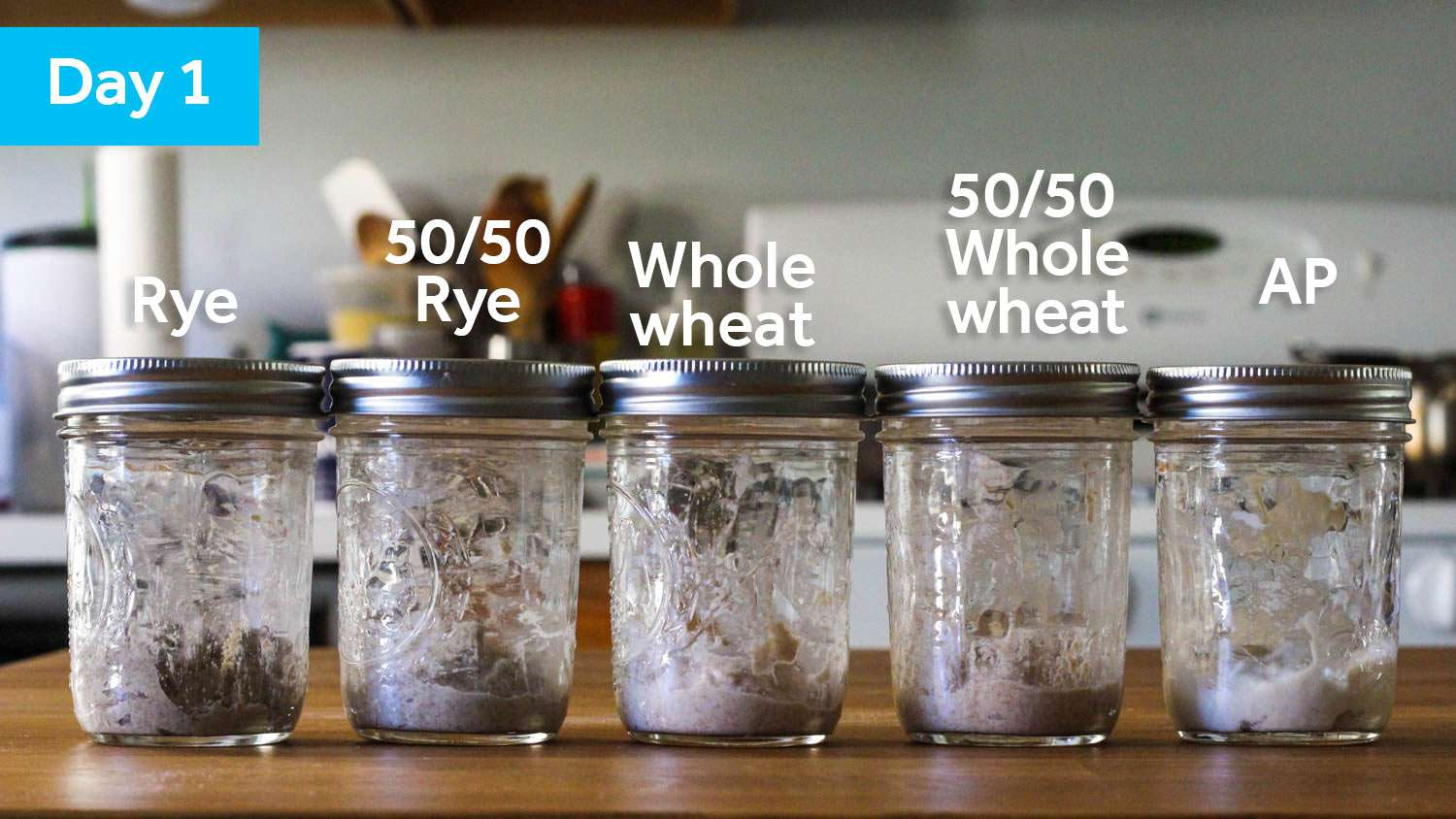 Five sourdough starter samples on day 1, each in its own jar