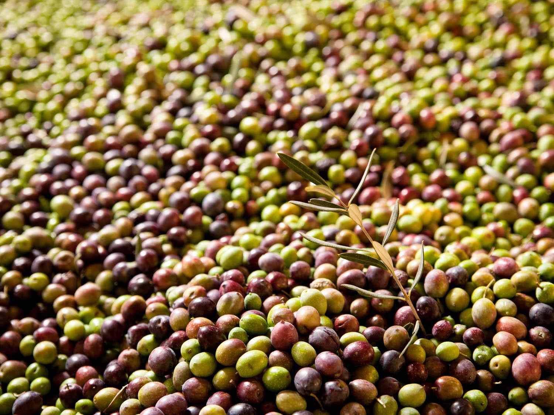 20140910-olives-flickr-fabrizio-angius-6-.jpg
