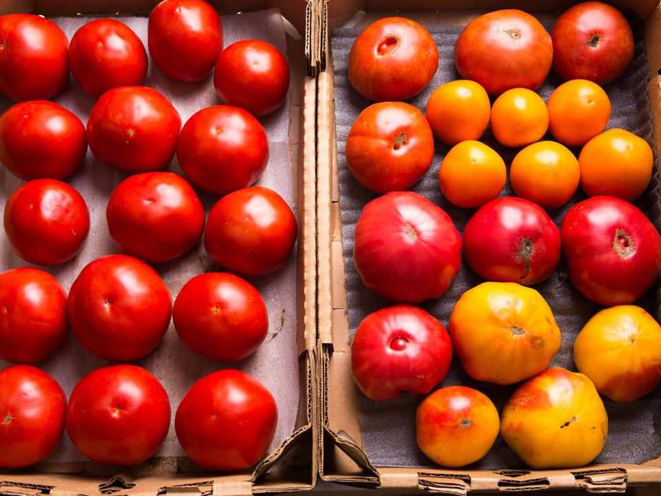 20140922-tomato-testing-part-3-vicky-wasik-1